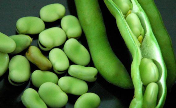العناصر الغذائية في الفول, السعرات الحرارية - الكربوهيدرات - العناصر الغذائية في الفول الأخضر