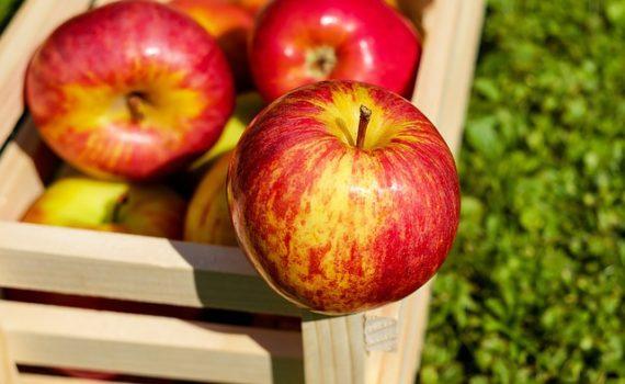 فوائد التفاح, العناصر الغذائية في التفاح, السكريات - الكربوهيدرات - العناصر الغذائية في التفاح