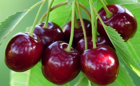 العناصر الغذائية في الكرز, السعرات الحرارية - الكربوهيدرات - العناصر الغذائية في الكرز