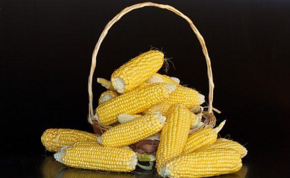 العناصر الغذائية في الذرة, السعرات الحرارية - الكربوهيدرات - العناصر الغذائية في الذرة
