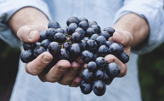العناصر الغذائية في العنب, السعرات الحرارية - الكربوهيدرات - العناصر الغذائية في العنب