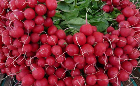 العناصر الغذائية في الفجل, السعرات الحرارية - الكربوهيدرات - العناصر الغذائية في الفجل