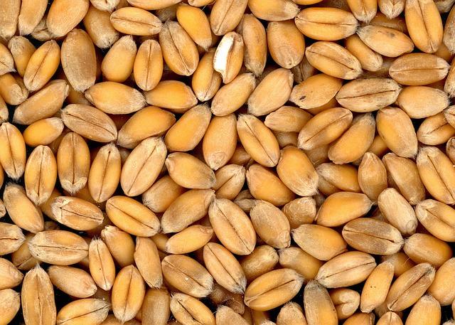 العناصر الغذائية في حبوب القمح, السعرات الحرارية - الكربوهيدرات - العناصر الغذائية في حبوب القمح