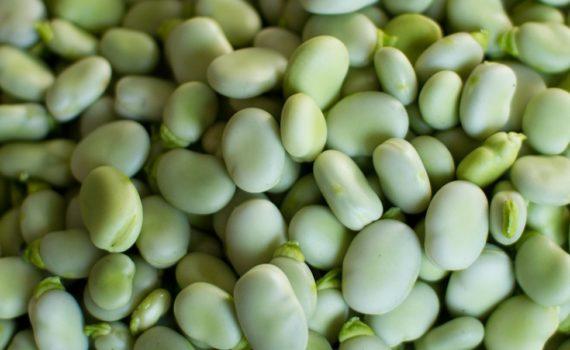 العناصر الغذائية في الفول الأخضر المطهو, السعرات الحرارية - الكربوهيدرات - العناصر الغذائية في الفول الأخضر المطهو