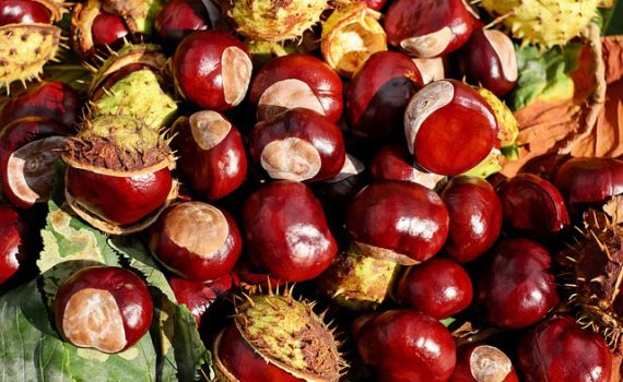 العناصر الغذائية في الكستناء, السعرات الحرارية - الكربوهيدرات - العناصر الغذائية في الكستناء