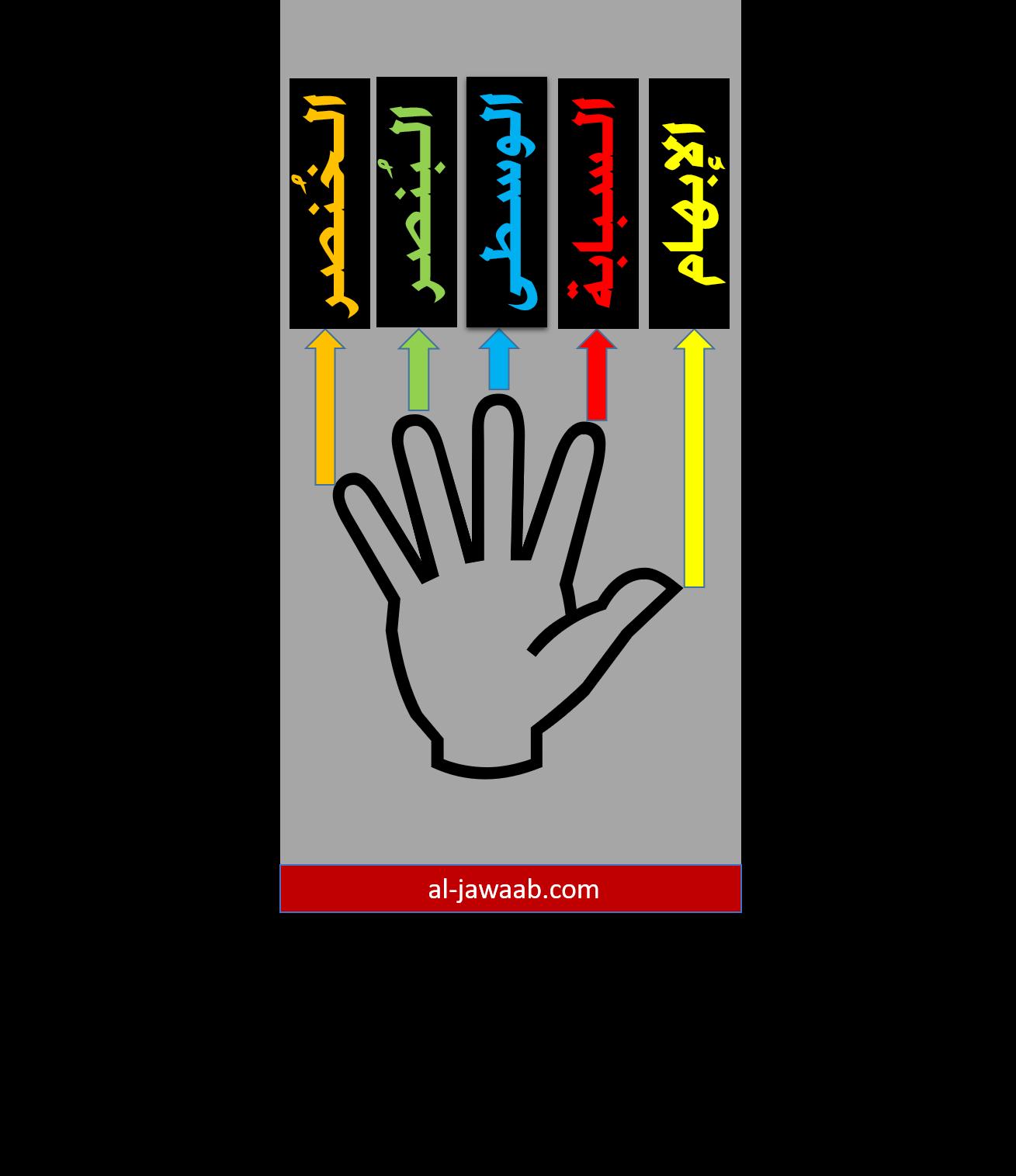 اليد, الكف, الابهام, السبابة, الوسطى, البنصر, الخنصر